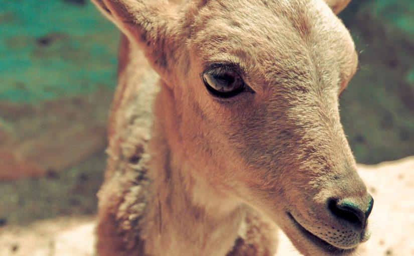 ¿Cómo ayudar a los animales en AptoVegano?
